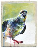 Pigeon 04 by nuances-curieuses