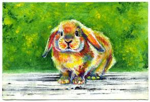 Rabbit sketch by nuances-curieuses