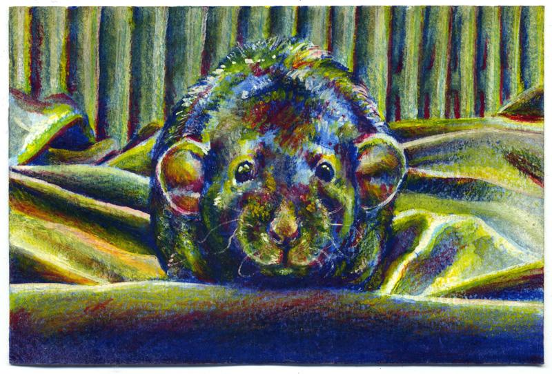 Rat sketch 05 by nuances-curieuses