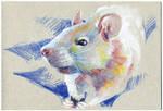 Rat 06