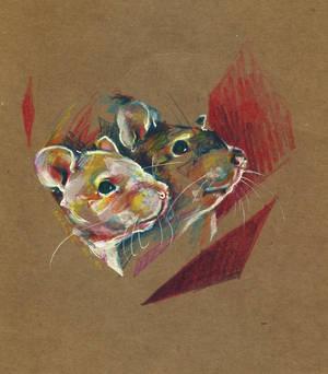Rat couple II