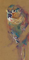 Bird I by nuances-curieuses