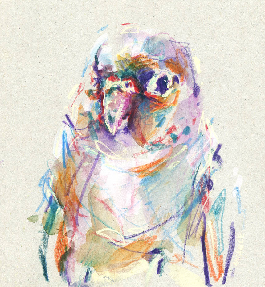 Bird II by nuances-curieuses