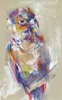 Bird III by nuances-curieuses