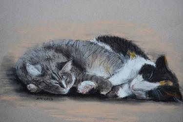 Comfort companions by Bragerygg