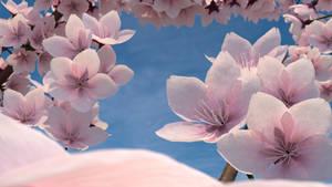 Cherry Blossoms Blender