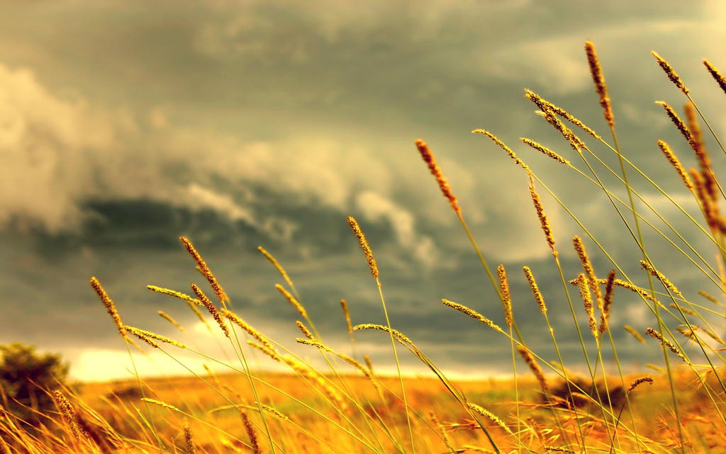 Grass by Jorlin