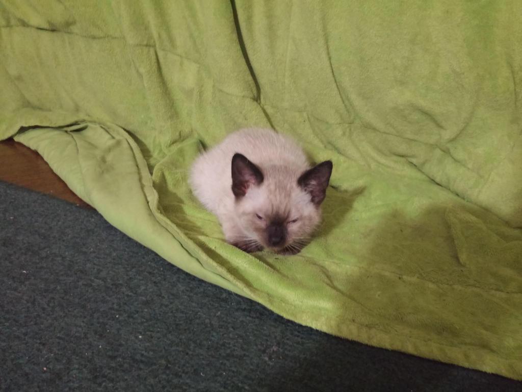 Sleepy kitty :3 by violetpone