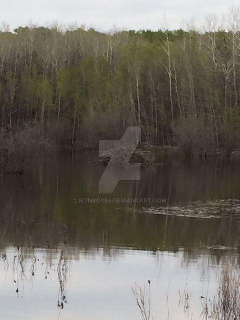 Beaver Pond Sk by mtnboy64
