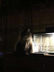 Angel on the Dresser! by Godismyrefuge