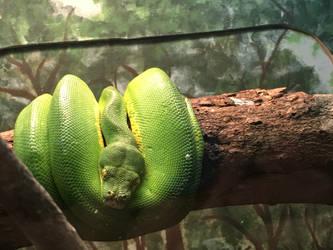 Green Tree Boa Zoo Pic 05 by Godismyrefuge