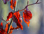 Nice colours of the leaves