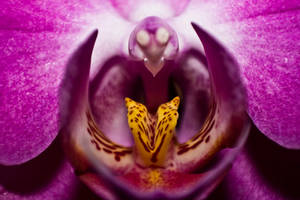 Flower by chamathe