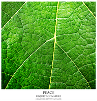 Peace - Request of Nature by chamathe
