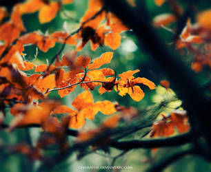 Autumn Leaves by chamathe