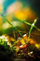 Petite Mushroom Sunbath by chamathe