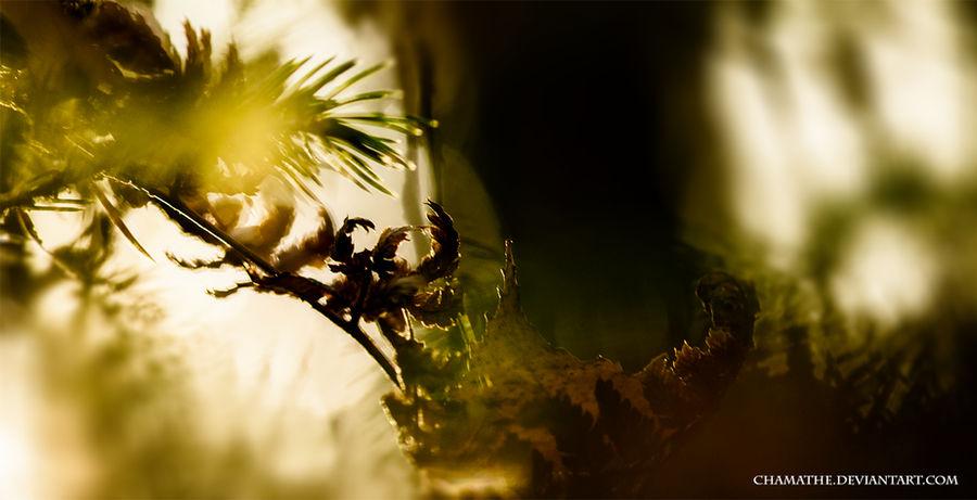 Scorpion King by chamathe