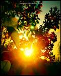 Sunset by chamathe