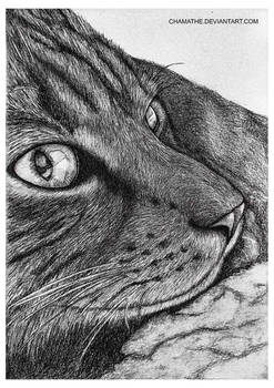 Pencil Drawing - Our cat
