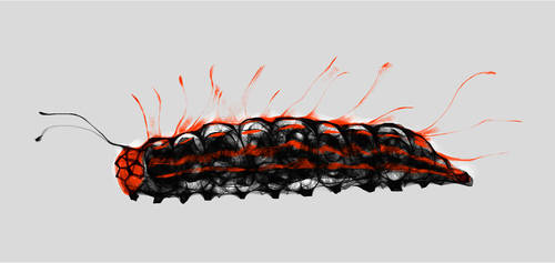 caterpillar by hypnothalamus