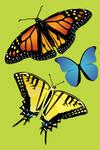 Butterflies Vector by aibrean