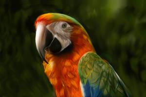 Single Parrot