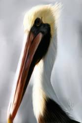 Stork Creature