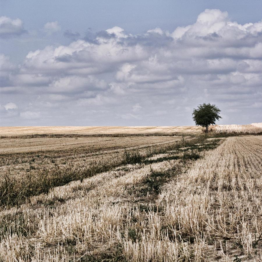 La cle des champs by Anupthra