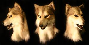 Sable Husky
