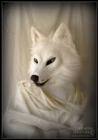 White Wolf by Qarrezel