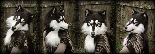 Husky - mask refurb by Qarrezel