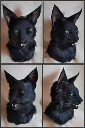 Black Cat by Qarrezel