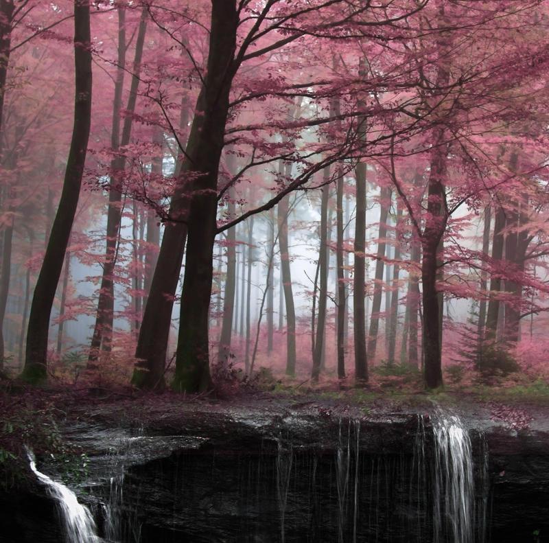 خلفيات دمج ستوكات دمج خلفيات غابة ستوكات غابة خلفيات دمج premade_background_2_by_yourfreestock-d6h6b2t.jpg