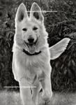 Chien/Dog