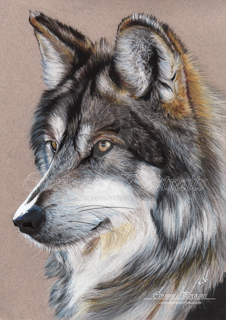 grey wolf by sadness40 on deviantart