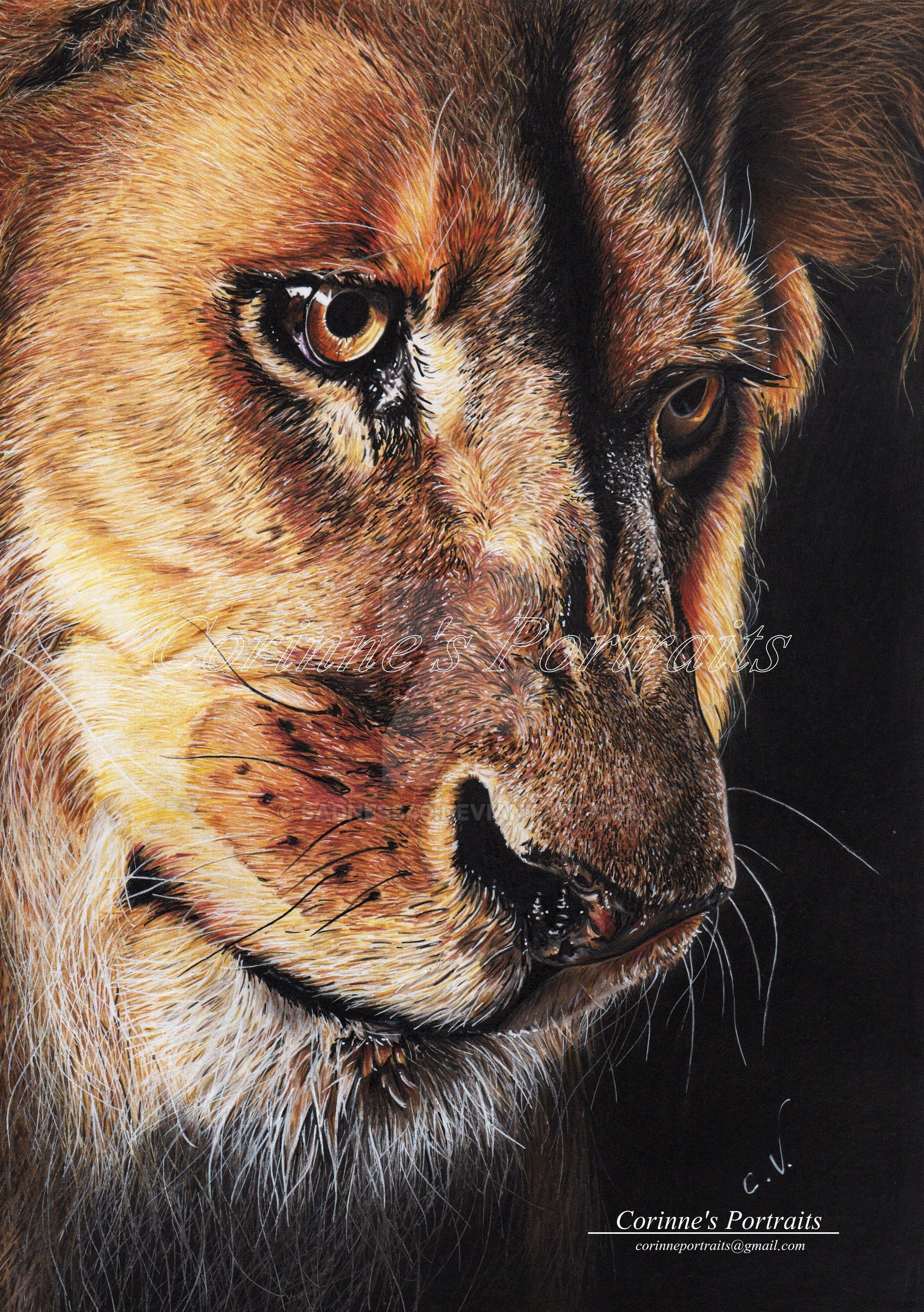 Lion by Sadness40