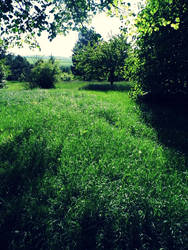 A green heaven by Pauline-graphics