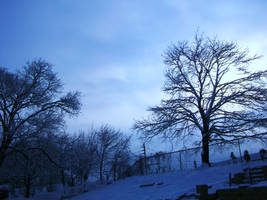 Snowy day X by tidbitys619