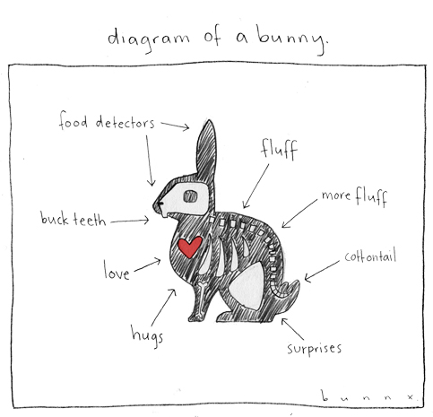 diagram of a bunny by abunnydance on deviantart #11