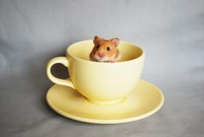 Crumpets in a Mug by becceropolis