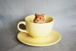 Crumpets in a Mug