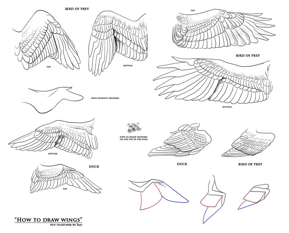 How To Draw Eagle Wings