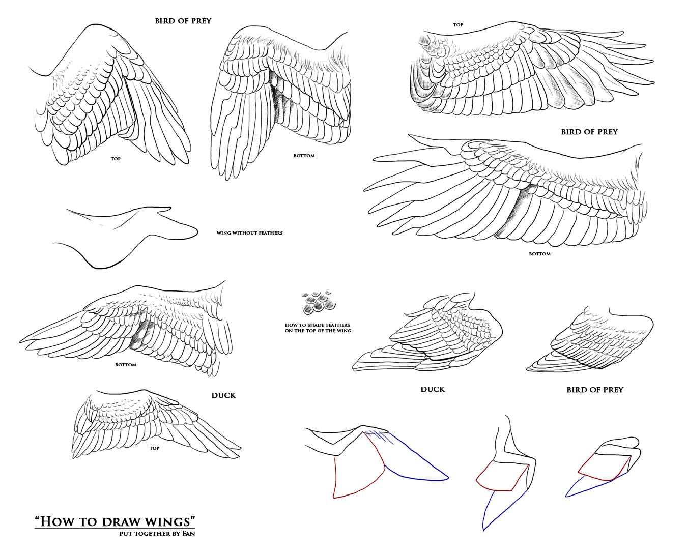 How to draw wings - resources