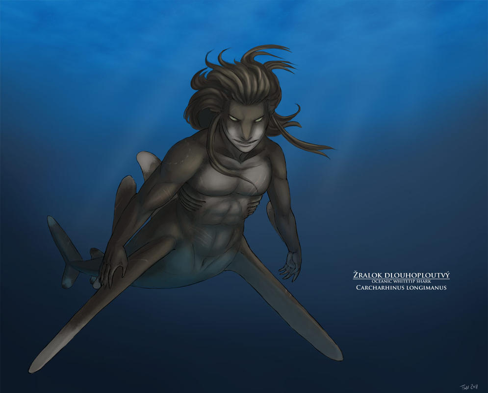oceanic whitetip shark by Fan-the-little-demon