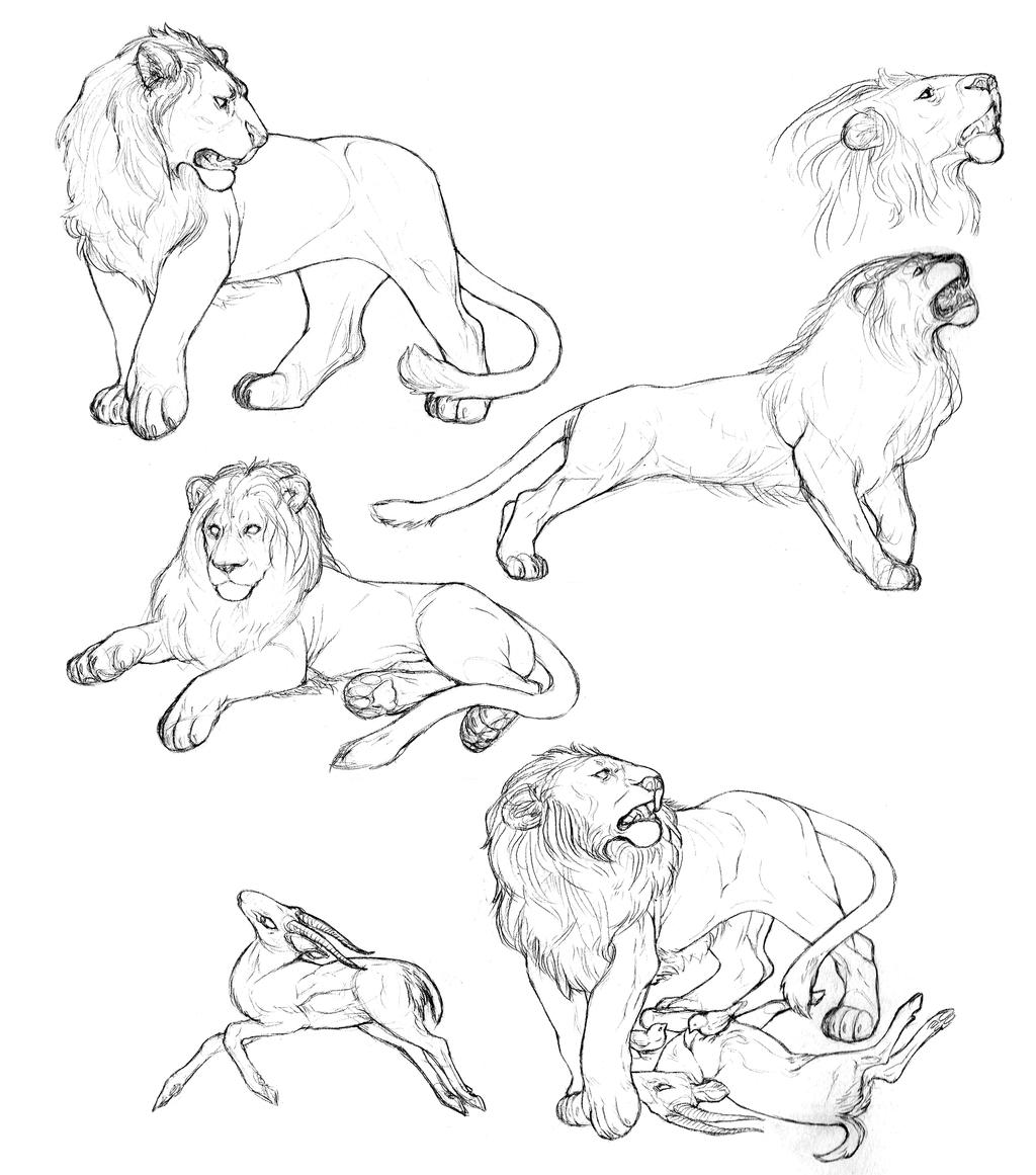 lion sketches by caffeinetooth traditional art drawings animals 2013 ...