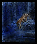 Tiger in Blue Paradise