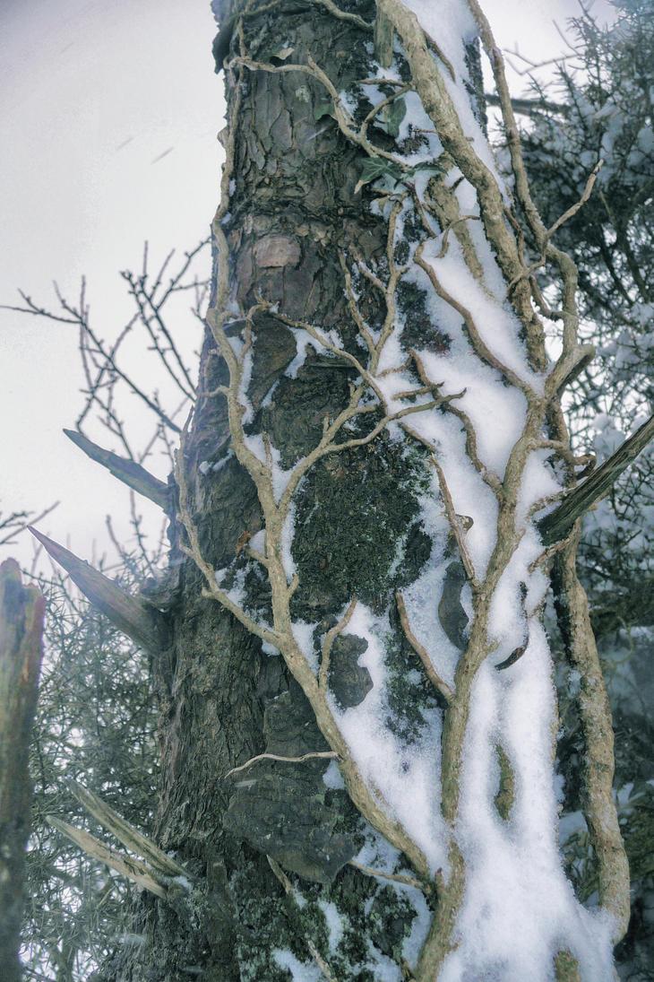 Tree on Tree by flesheatingbug