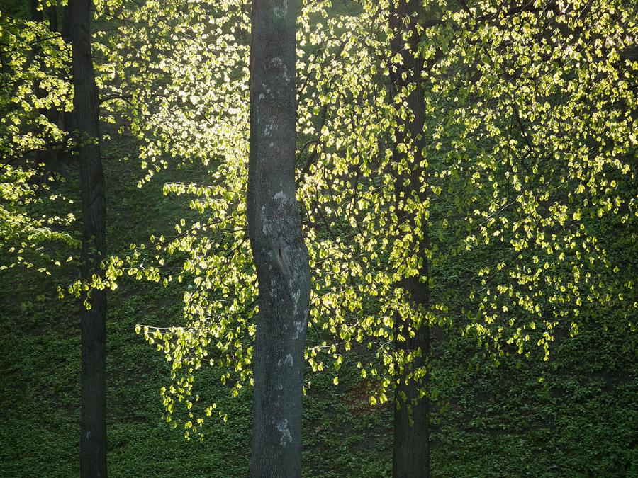 Golden Spring by Vorchonok