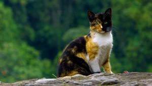 Two Faced Cat II by DAREKSIG