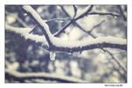 Winter Snapshot No.1